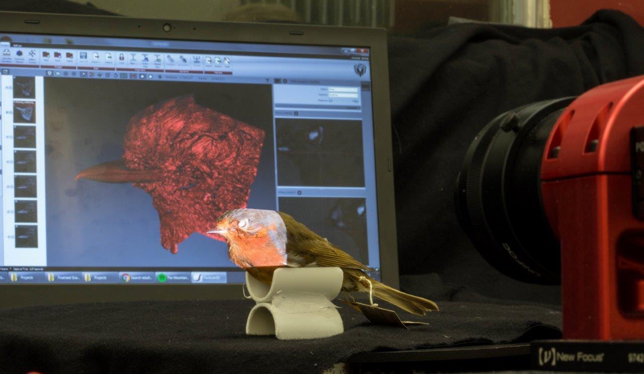 Bird Scan