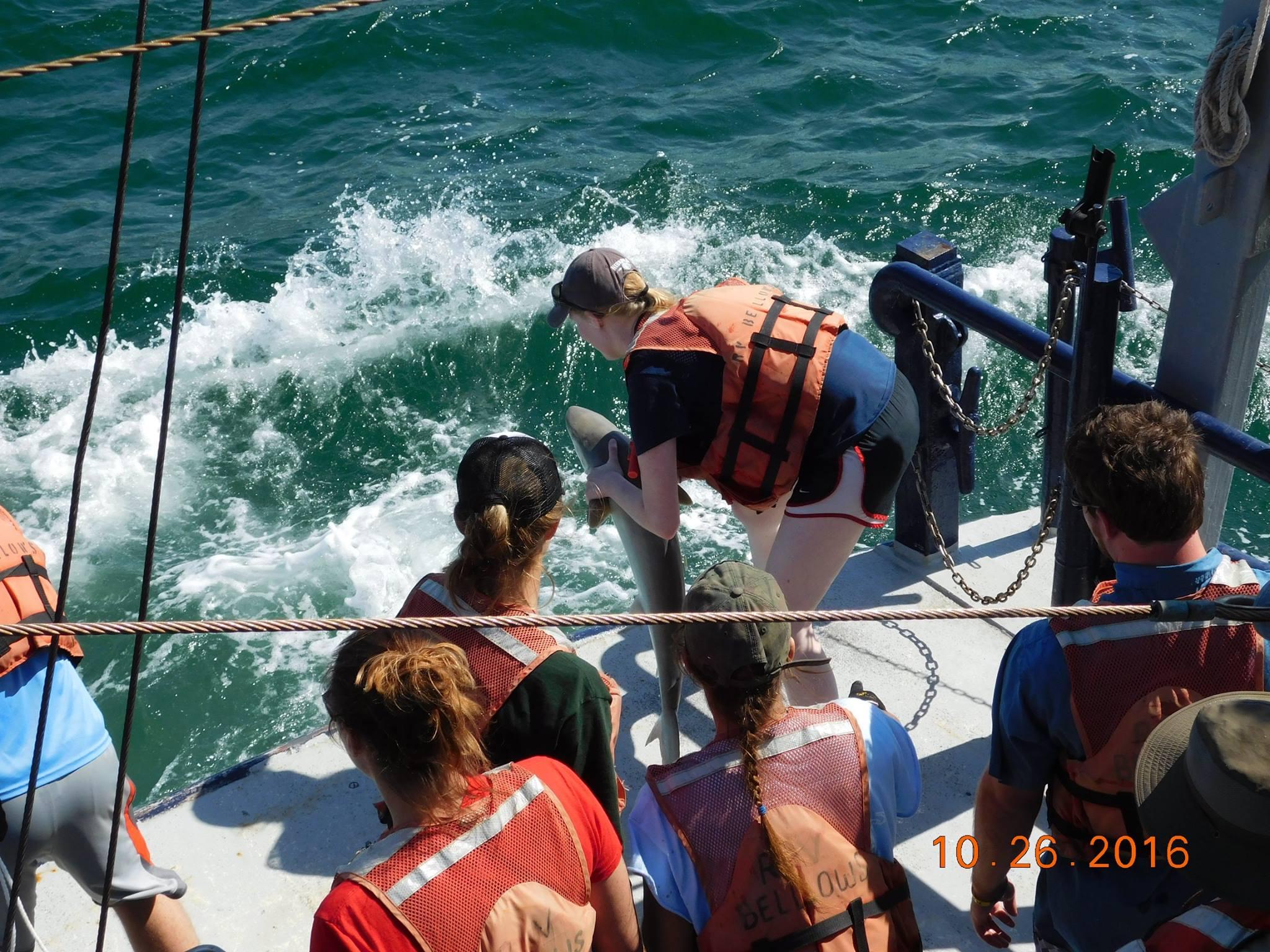 Student Releases Shark